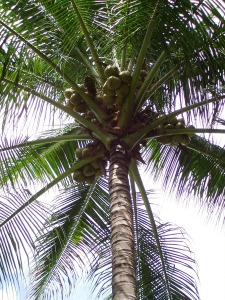 There are more palm trees in El Salvador since most of the country sits at a lower elevation than Ocotepeque.